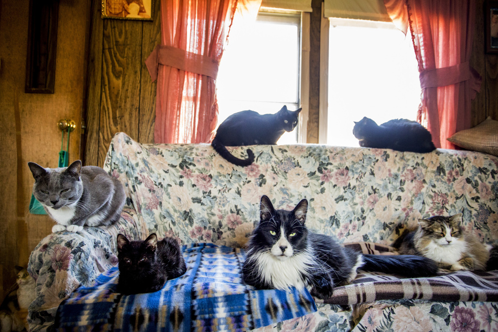 """About two dozen cats live in a Dixfield trailer home that's now a de facto shelter maintained by the Dixfield Cat Ladies. A former resident here left a modest fortune to provide the strays with """"shelter, food and health care,"""" but the money's been tied up in litigation for years."""