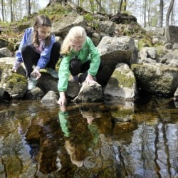 Greely Middle School students Taylor Pronovost, left, and Carly Asherman release baby trout into Collyer Brook in Gray on Tuesday.