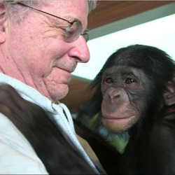 "Animal-rights lawyer Steven M. Wise is seen in the documentary ""Unlocking the Cage,"" with a chimp named Teko."