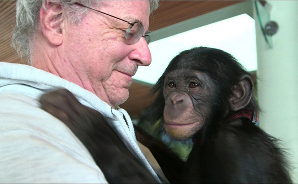 """Animal-rights lawyer Steven M. Wise is seen in the documentary """"Unlocking the Cage,"""" with a chimp named Teko."""