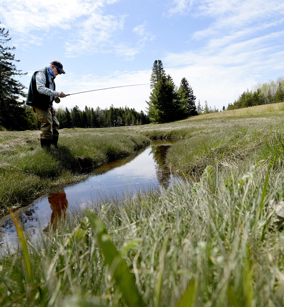 Steven DeWick of Woolwich inspects a tributary while hunting in the Schoodic Peninsula area for remote streams with sea-run brook trout.