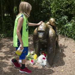 A child touches a gorilla statue where flowers have been placed at the Cincinnati Zoo & Botanical Garden on Sunday. After a 4-year-old fell into an exhibit Saturday, a zoo response team killed a gorilla to rescue the boy.