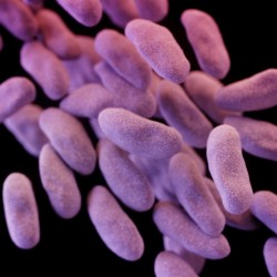 "CRE, a family of bacteria pictured, has been called ""nightmare bacteria"" because, in some instances, these superbugs kill up to half the patients infected."