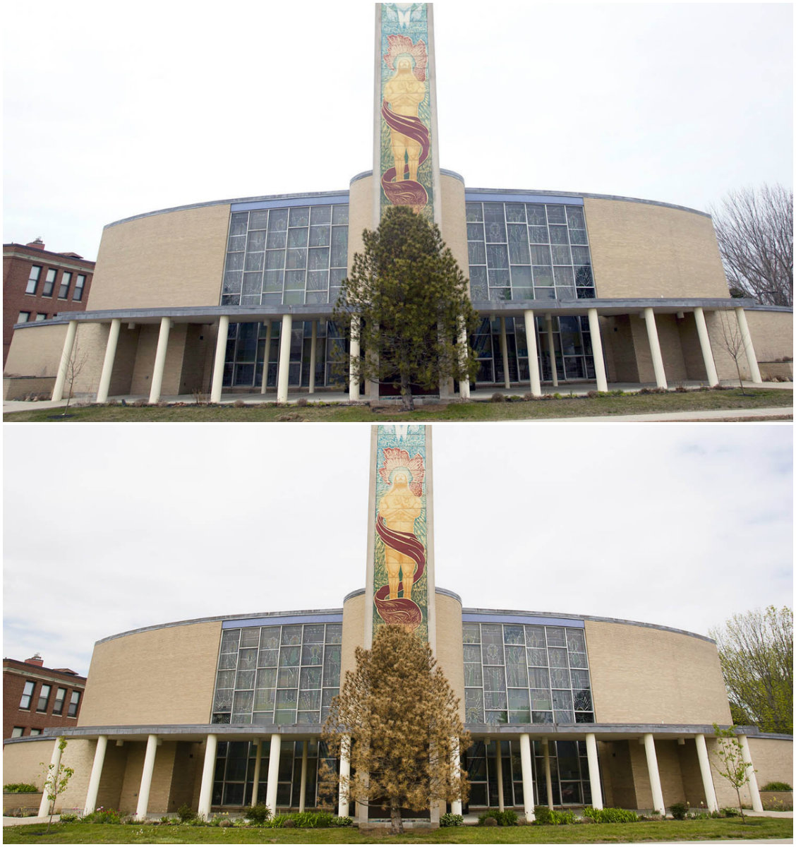 Photos from March 31, top, and May 23, bottom, show that the green needles of the Austrian pine that obscures the mural of Jesus Christ on Holy Cross Catholic Church in South Portland turned brown in less than eight weeks.