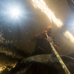David Anderson, the fish caretaker at L.L. Bean, looms above the waterline as he cleans the aquarium at the flagship store in Freeport.