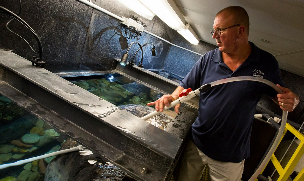On the job david anderson tends to the fish swimmingly at for Fishing jobs in maine