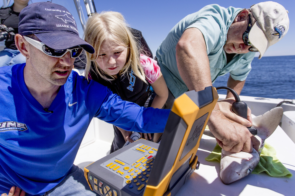 James Sulikowski, left, uses an ultrasound to examine a pregnant spiny dogfish off the coast of Biddeford Pool, aided by his daughter, Kendall, 8, and fellow UNE professor Dave Johnson.