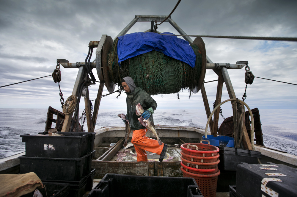 Elijah Voge-Meyers carries cod caught in the nets of a trawler off the coast of New Hampshire in April. Fishermen in the northeastern U.S. are struggling with warming waters that have transformed some of the country's oldest commercial fisheries.