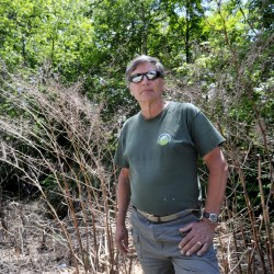 Bob Shafto, Falmouth's public lands ombudsman, stands in front of a swath of dead knotweed along Blackstrap Road. Knotweed is one of the targets of a campaign to stop the spread of land-based invasive species. Officials are now considering ordinances that would prohibit the sale and distribution of invasive species.