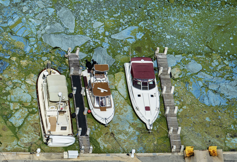 Boats are surrounded by algae Wednesday in Stuart, Fla. Blooms that formed last week in the St. Lucie River are spreading and the governor has declared a state of emergency.