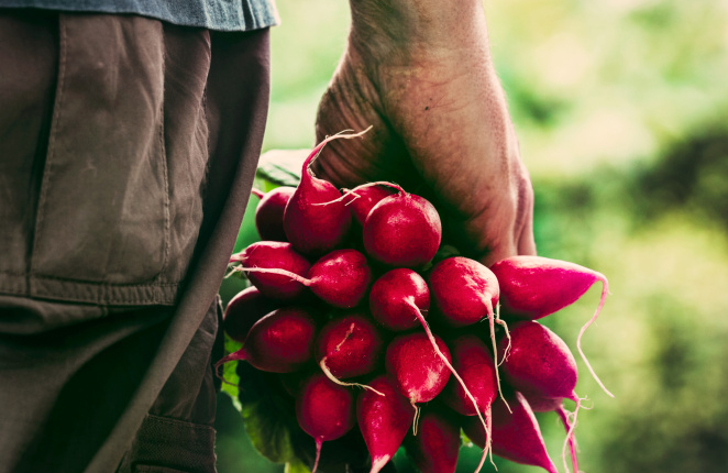 Radishes' bracing, head-clearing bite is a spring tonic.  Associated Press file photo