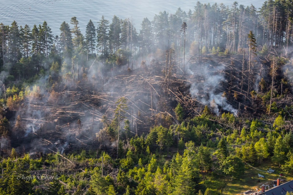 Dense underbrush posed a challenge to firefighters on Sheep Island.