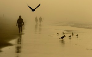 People and birds walk along the beach in Old Orchard Beach as the sun begins to burn off an early morning fog. The fog eventually cleared, revealing a perfect beach day of sun and temperatures in the 80s.