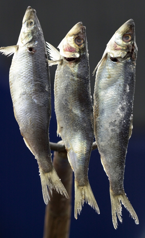 Popular as a salted delicacy, herring is also a vital and suddenly sparse baitfish for the lobster industry.