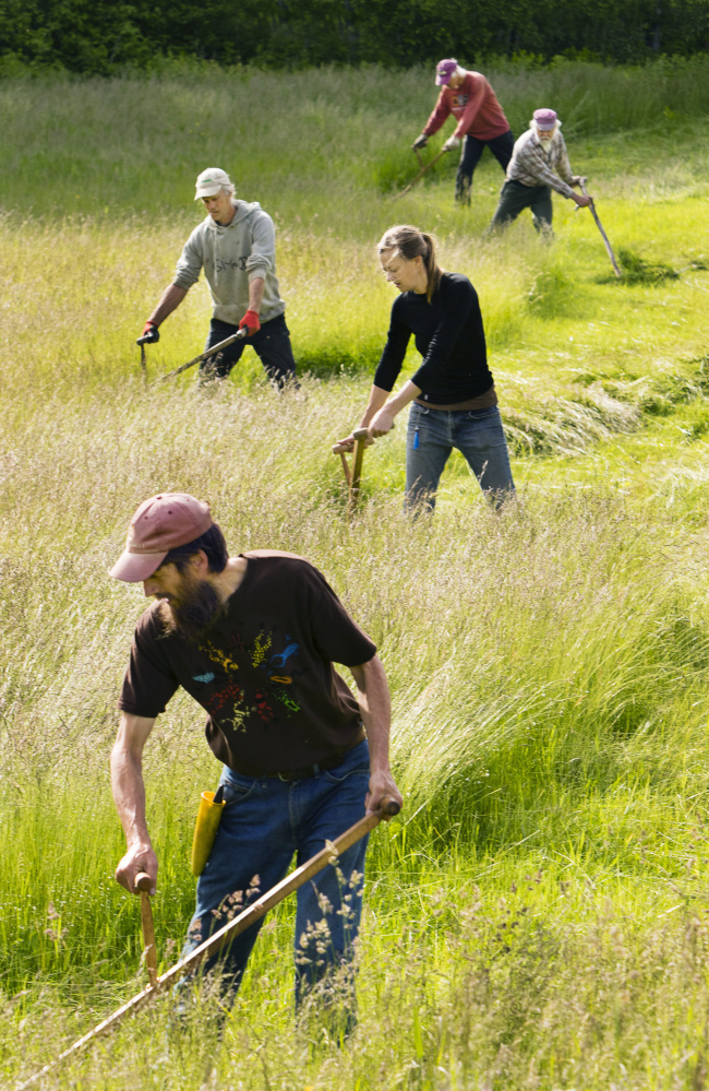 At MOGFA's Farm & Homestead Day in June, scythe users tackle a grassy expanse.