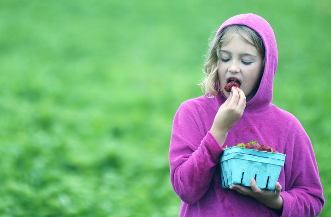 Maddy Gurschick, 8, of Minot, samples fruit she picked in a patch at the Stevenson's Strawberry Farm in Wayne Sunday. Gurschick helped collect several pints of the ripe berry that farmer Tom Stevenson said is still available for picking this week, which may be the last of the season.