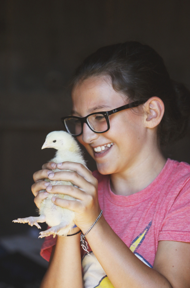 GORHAM, ME - JULY 24: Althea McNulty, 11, of Falmouth gets up close with a two week-old broiler chicken while visiting Underhill Fiber Farm in Gorham. (Photo by Jill Brady/Staff Photographer)