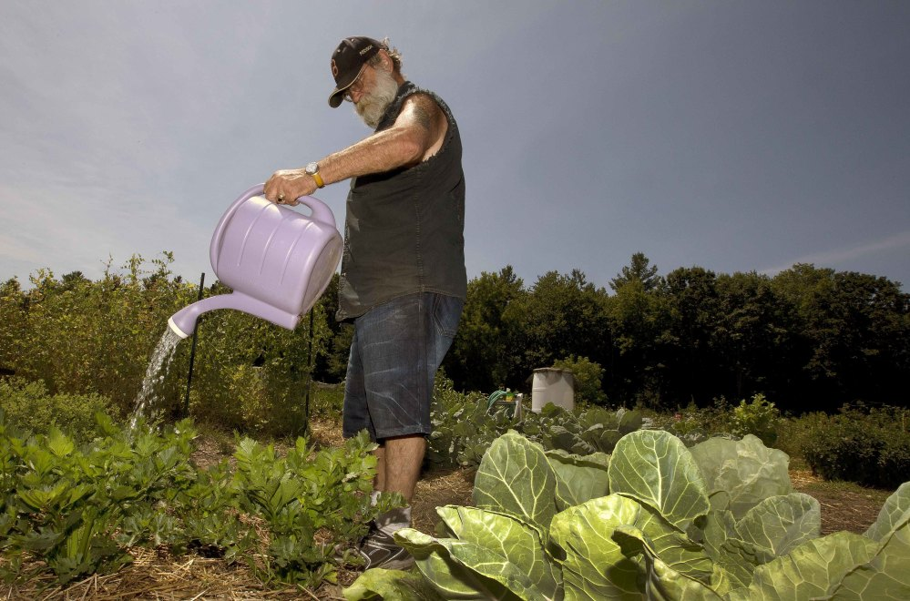 Peter Ellermann waters his garden at the Community Gardens in Concord, N.H. The dry summer has forced Ellermann to cart in 30 gallons of water in five-gallon containers three times a week to keep his plants healthy.