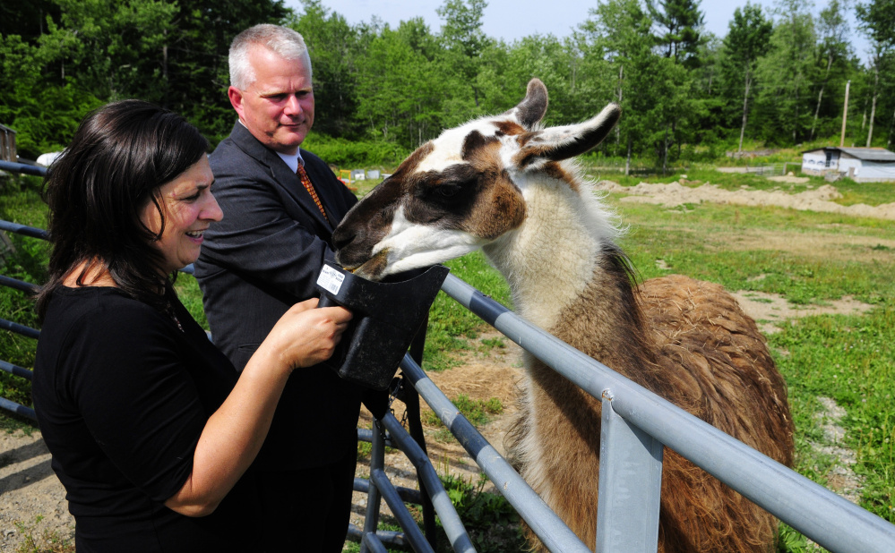 Milva Smith feeds a llama called Dolly as Stephen Smith watches at Food Forge.