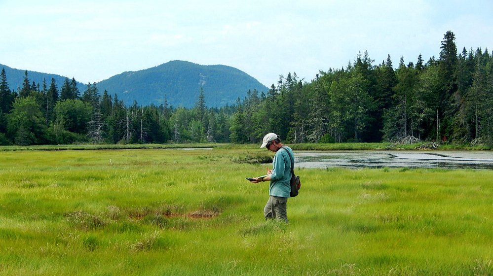 Mittelhauser, at the Bass Harbor Salt Marsh, is a graduate of the College of the Atlantic who has devoted his career to Maine's plants.