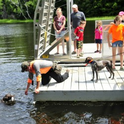 One of Jason Carter's dogs returns to the dock after retrieving a toy during a field day Saturday on Swan Island organized by the Maine Department of Inland Fisheries & Wildlife.
