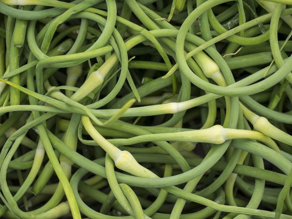 Garlic scapes are a seasonal way to add a shot of flavor to classic recipes.