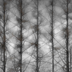"""Todd Watts, """"Blanchard Weather Report, 5-27-2015,"""" digital print, from """"Branching Out."""""""