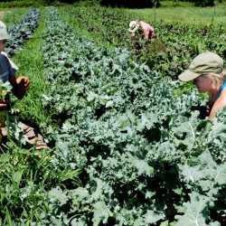 Jarret Haiss and Johanna Burdet work in one of their gardens at their Moody Gardens farm in Palmyra. Young farmers are reclaiming land for food production in Maine at a rate not seen anywhere else in the country.