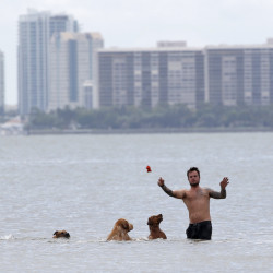A beachgoer plays with his dogs last week off Hobie Island Beach Park in Miami. The U.S. Centers for Disease Control and Prevention on Friday said pregnant women may want to consider postponing nonessential travel to Miami-Dade County if they're concerned about possible exposure to the Zika virus, which can cause severe birth defects.