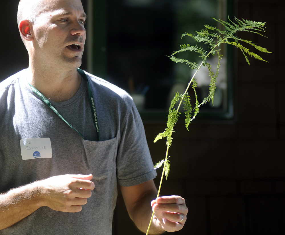 Botanist Eric Doucette describes the structure of a fern Sunday during a field trip that was part of the annual meeting of the Kennebec Land Trust in Fayette.