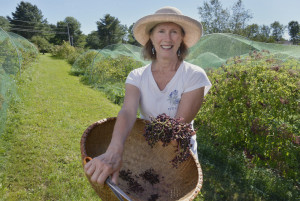 Abbie Sewall grows organic elderberries and Aronia on her Freeport farm.