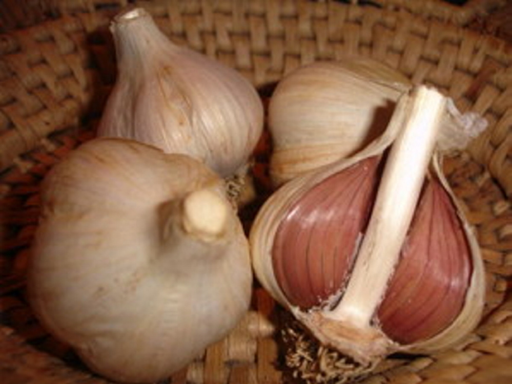In the past decade, sales of German Extra-Hardy garlic like this have increased steadily for Fedco, which buys some of the bulbs from Maine farmers.