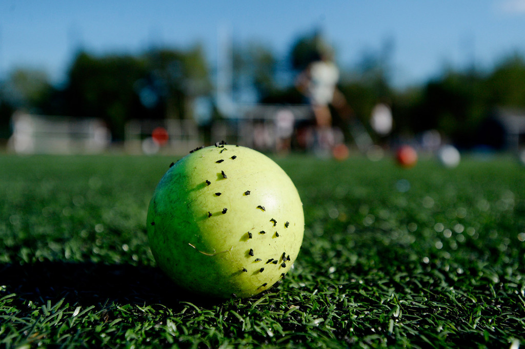 Particles of crumb rubber infill stick to a field hockey ball at the Yarmouth High School field.