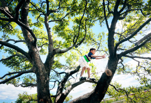 Aalekha Rai, 7, of Rochester, N.H., explores a tree from up in its branches at Fort Williams Park in Cape Elizabeth.