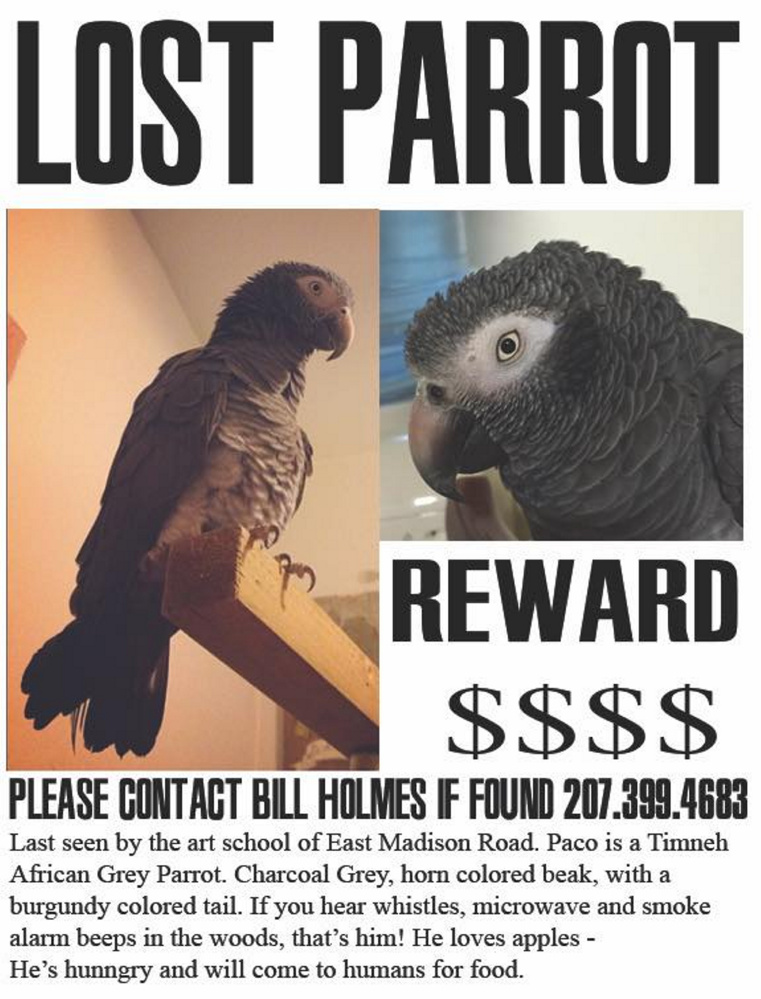 A missing parrot poster for Paco, which belongs to Oscar Cornejo, who's on the staff at the Skowhegan School of Painting and Sculpture in East Madison. The bird flew away Thursday and has been seen four times.