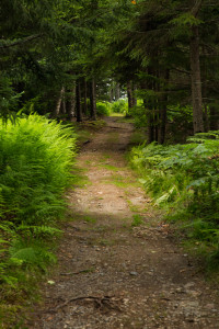 Much of the trail that traces the shore of Warren Island is lined with ferns.