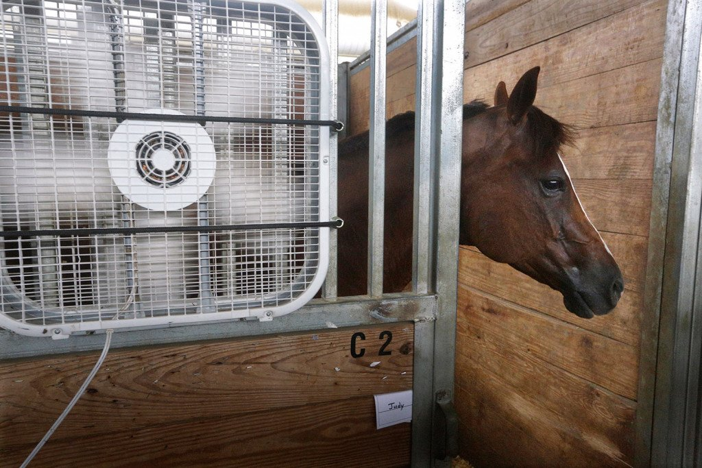 Hank, a quarter horse from Paris, Illinois, stays close to a fan keeping cool inside a barn at the Illinois State Fair grounds in Springfield in this July 21 file photo. NASA calculates that Earth broiled to its hottest month in recorded history last month.
