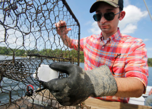 Lee Robertson, a research assistant for Kepley Biosystems, loads an Organobait synthetic bait block into a crab pot. The lobster and crab fisheries have grappled with a shortage of bait, and synthetic bait may help them.