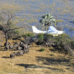 Scientists with Great Elephant Census fly over Botswana  during the 2014 survey of savanna elephants on the continent. International and domestic ivory trades continue to drive poaching across the continent, according to a study released Wednesday. Great Elephant Census, Vulcan Inc. via Associated Press