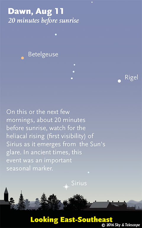 Sirius Becomes Visible During August