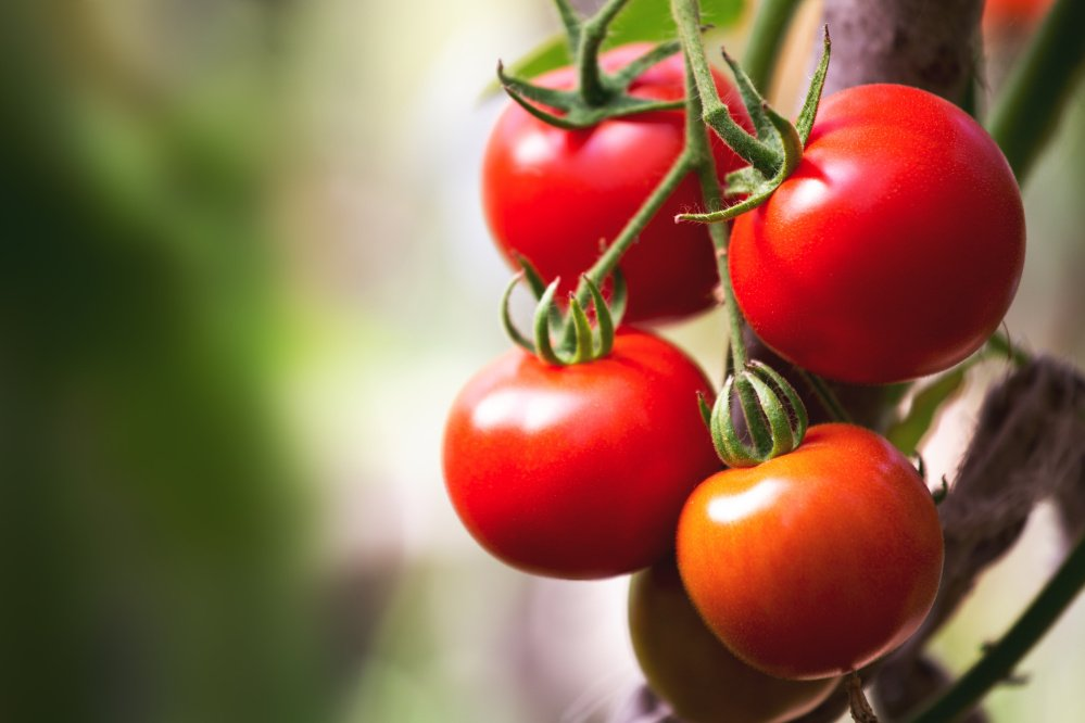 You can use any type or color tomato, but plum tomatoes are the meatiest and produce the most substantial result.