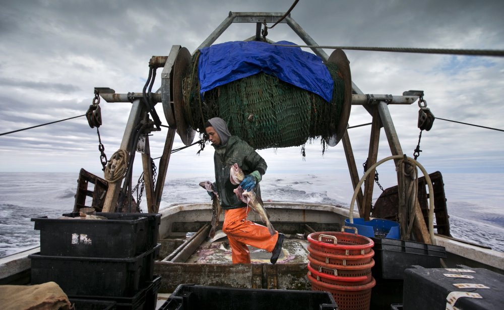 Elijah Voge-Meyers carries cod caught in the nets of a trawler off the coast of New Hampshire in April. The United States and Canada have brokered a deal to share what's left of the dwindling North American cod fishing business in the Atlantic next year. The two fisheries overlap in the eastern reaches of Georges Bank, an important fishing area located off of New England.