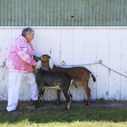Debby Orff of Waldoboro comforts Gael and Gayleen, two Nubian goats owned by Phil Cassette of Saco, after Gael became spooked and broke free from her collar outside the show barn Sunday at the Cumberland County Fair.