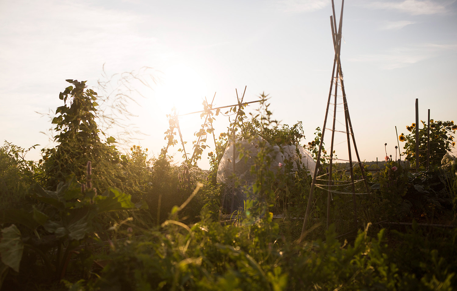 The sun begins to set at the North Street Community Garden on Saturday. The garden on Munjoy Hill offers views of Back Cove and even Mount Washington on clear days. Brianna Soukup/Staff Photographer