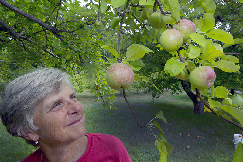 Laurie Loosigian of Apple Annie's Orchard looks at the few apples she has, in Brentwood, N.H.