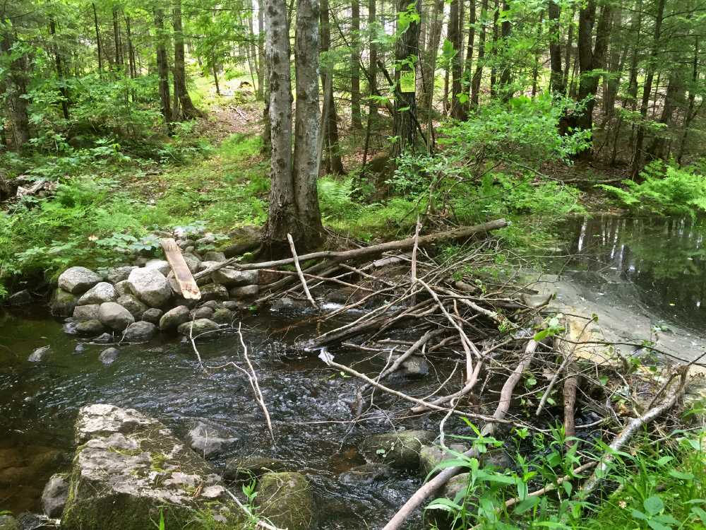 There 39 s a jolt of beauty around holt pond preserve the for Small pond dam design