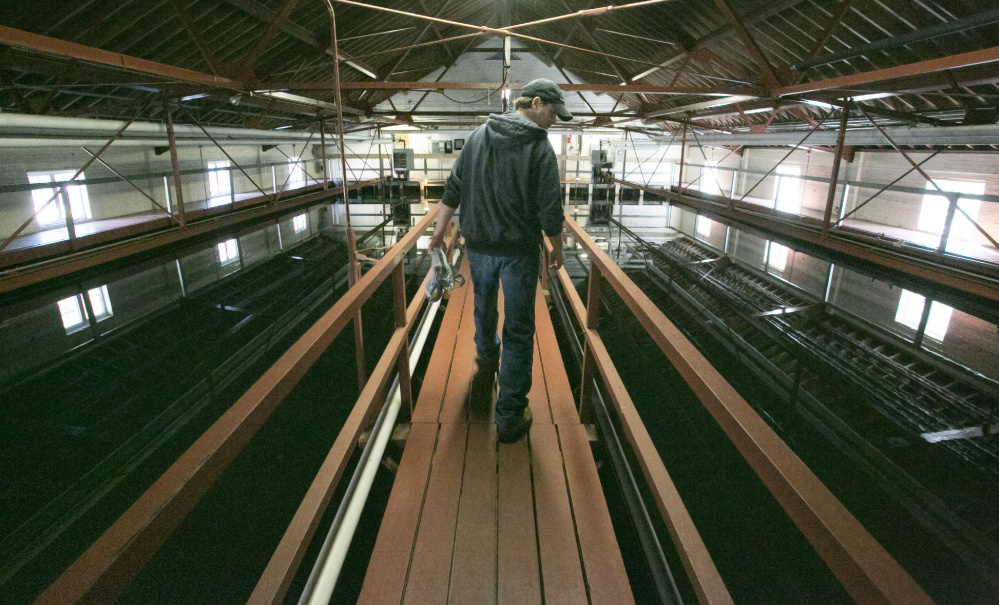 Plant operator Randy Nichols walks over sediment pools at the Kennebunk, Kenne- bunkport and Wells Water District in Kennebunk on Wednesday.