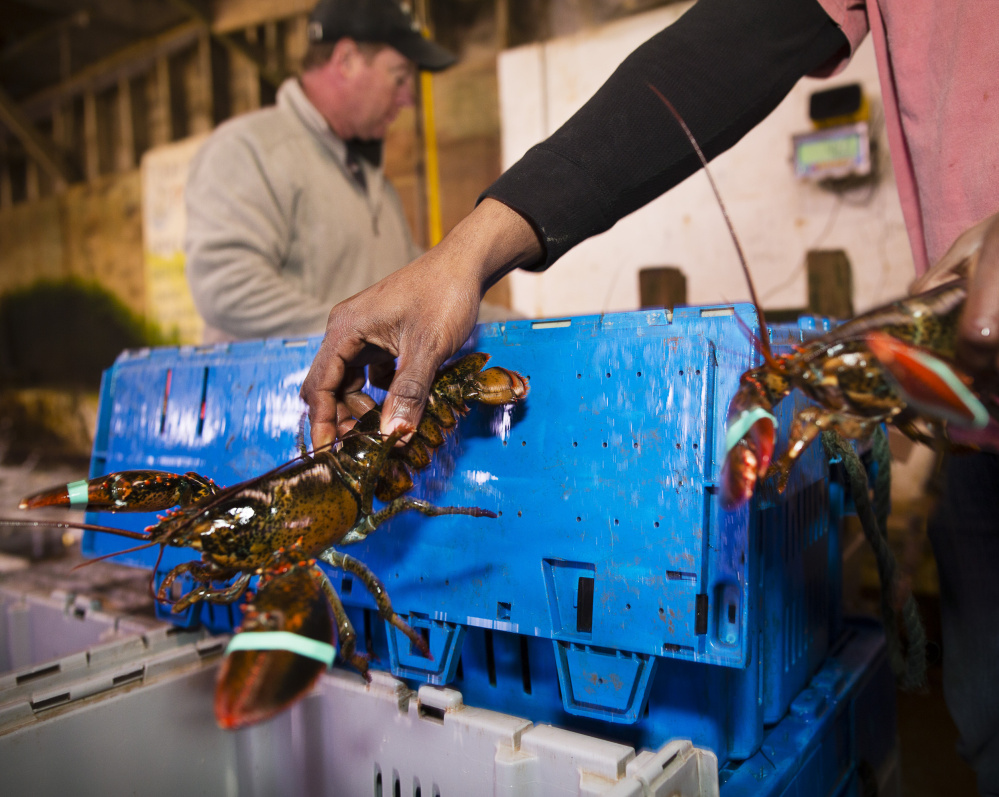 A European Union committee decided it couldn't support an import ban on American lobsters because they are not an invasive species. But the group might explore other measures to protect European lobsters without disrupting trade.