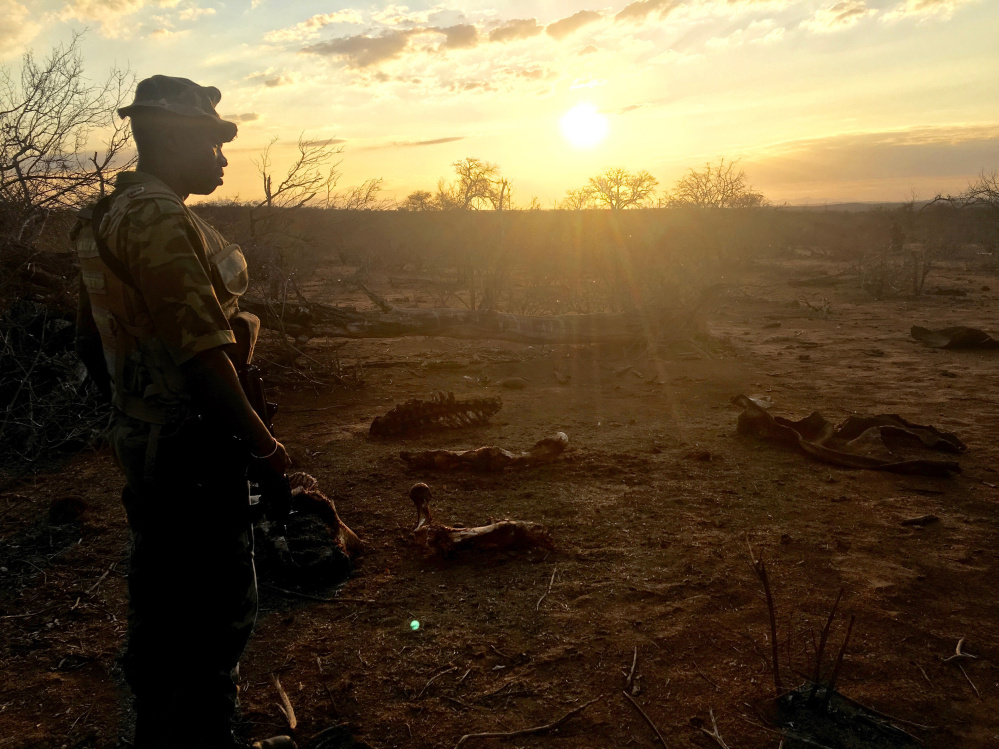 At left, a member of the Protrack Anti-Poaching Unit looks at the remains of a rhino on a private game reserve in Limpopo province.