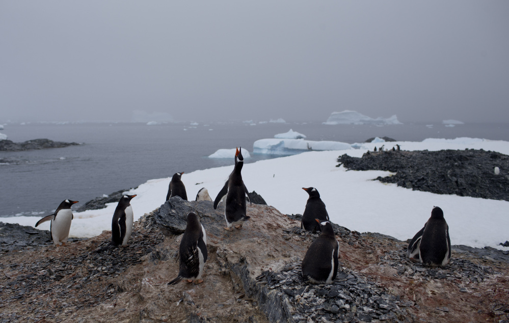 Whether caused by people or nature, the melting of Antarctic glaciers could raise sea levels to unprecendented levels and threaten the well-being of many species, including penguins.